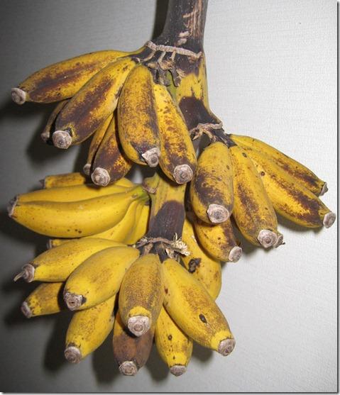 IMG_5863島バナナ完熟