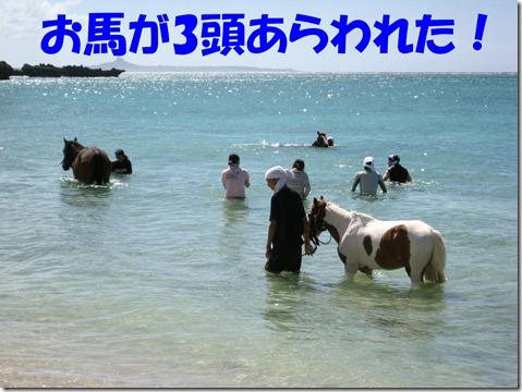 IMG_0123馬3頭