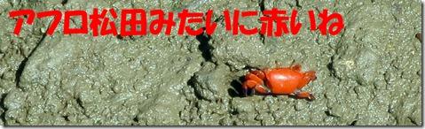 IMG_0133 赤いカニ