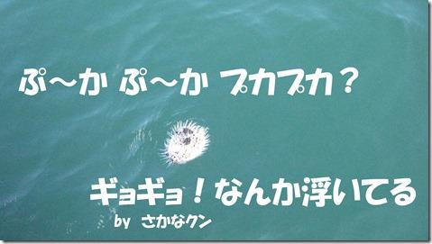 IMG_1409ぷかぷか