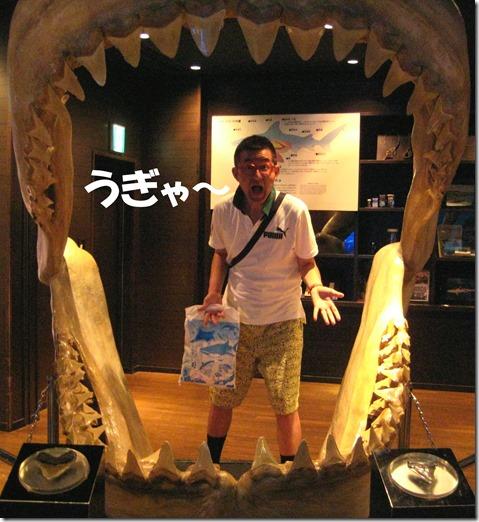 IMG_1438サメ