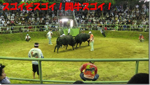 IMG_1512スゴイ闘牛
