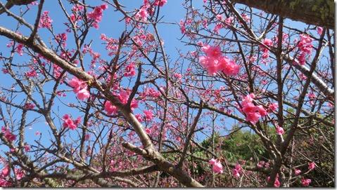 IMG_0374桜