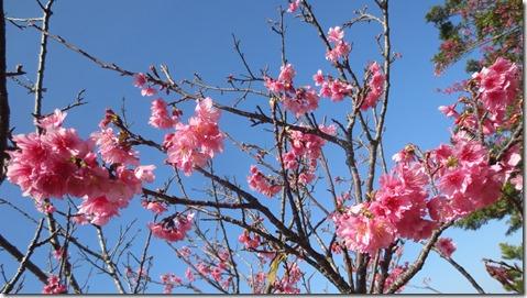 IMG_0376桜