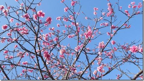 IMG_0404桜