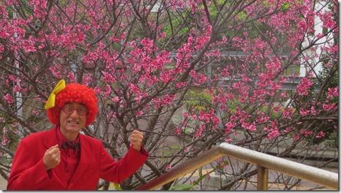 IMG_0435桜とアフロ松田